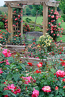 Senior Center garden with roses on trellis and bench #5854. Virginia.