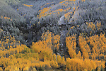 First snow of autumn in Vail Valley, Colorado. John offers autumn photo tours throughout Colorado.