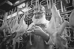 Scan of vintage print. Empire Kosher Chicken processing plant. Kosher. Factory worker with protective mask for beard and hair. File# 91-305-E 29, 1991