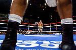 Boxing Portfolio