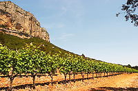 Domaine de l'Hortus. The Montagne Massif de l'Hortus mountain cliff. Pic St Loup. Languedoc. Mourvedre vines facing south. France. Europe. Vineyard.