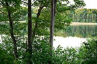 GERMANY, Plau, lake and forest / DEUTSCHLAND, Plau, See und Wald, Schilfgürtel, Erlen