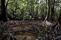 Palau Mangroves