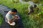 Fishing Cat (Prionailurus viverrinus) biologists, Tharindu Bandara and Maduranga Ranaweera, setting up camera traps in urban wetland, Urban Fishing Cat Project, Diyasaru Park, Colombo, Sri Lanka