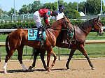 May 31, 2014: Take It Like a Man in the post parade of the G3 Aristides Stakes, Churchill Downs.  He is owned by Lynn and Lola Cash, trained by Kellyn Gorder, and ridden by Joseph Rocco Jr. Mary M. Meek/ESW/CSM