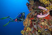 The Grain Wreck.U.S. Virgin Islands