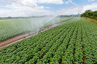 Irrigating potatoes with a raingun - Lincolnshire, June