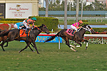 14 February 2010:  In The Rough with jockey Joe Bravo wins the Coconut Grove Stakes at Gulfstream Park in Hallandale Beach, FL.