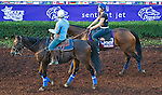 October 27, 2014:  Ageless, trained by Arnaud Delacour, exercises in preparation for the Breeders' Cup Turf Sprint at Santa Anita Race Course in Arcadia, California on October 27, 2014. John Voorhees/ESW/CSM