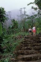 trail to Mt. Scenery, Saba Island, Netherlands Antilles, (Eastern Caribbean Sea, Atlantic), Atlantic