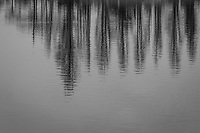 A black and white abstract captured along the shores of San Leandro Bay at the Martin Luther King Jr. Regional Shoreline.  Winter-bare trees reflecting in rippling water.