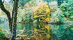 Mountain lake adorned in fall color and vivid reflections, Lake Sylvia,  Lake Sylvia State Park, Montesano, WA.
