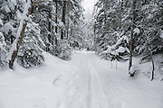 Fresh snowshoe tracks along the Hancock Notch Trail after a dusting of snow in Lincoln, New Hampshire USA.