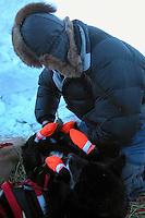 Tollef Monson booties his dogs at Unalakleet. Photo by Jon Little.