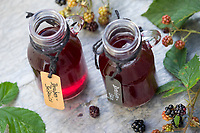Brombeer-Balsamico, Brombeer-Essig, Brombeerbalsamico, Brombeeressig, Brombeeren werden in Balsamico, Essig, Balsamico-Essig, Balsamessig eingelegt, Brombeere, Brombeeren, Beeren, Früchte, Frucht, Echte Brombeere, Rubus fruticosus agg., Rubus sectio Rubus, Rubus fruticosus, blackberry, bramble, fruit, berry, berries, Balsamic vinegar, aceto balsamico, balsamic, ronce
