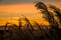 Native grasses around a neighborhood park glow in silhouette against a winter sunset sky.