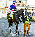 JANUARY 01, 2019 : Our Braintrust  in post parade the Jerome Stakes for 3-year olds at Aqueduct Racetrack on January 01, 2019 in S. Ozone Park, NY.  Sue Kawczynski/ESW/CSM