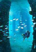St. Croix Underwater