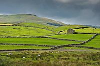 Stone barns and fields near Leyburn, North Yorkshire.