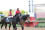 April 12, 2014: #4 Ride On Curlin with jockey Jon Court aboard before the start of the Arkansas Derby (Grade I) at Oaklawn Park in Hot Springs, AR. Zoie Clift/ESW/CSM