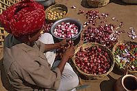 "Asie/Inde/Rajasthan/Env d'Udaipur : Restaurant ""Apani Dhani"" - Un homme épluche les oignons"