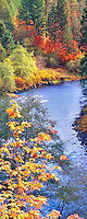 Fall colored trees on North Umpqua River, Oregon