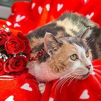 CATsnaps - CATS