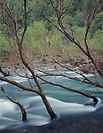 Ozark National Forest, AR<br /> Branches shaped by the current of the Big Piney Creek at Long Pool