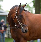 Belmont Morning with Triple Crown hopeful American Pharoah - 06/04/2015