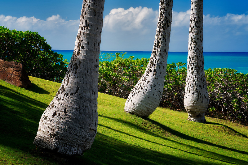 Palm trees and coast at Ko Olina, Oahu, Hawaii