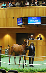 Hip194 Distorted Humor-Turko's Turn sold $875,000 at Fasig Tipton sales in Saratoga Springs NY 8.3.2010