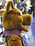 13 December 2008: Albany's Great Dane mascot watches the action during a game between Canisius and Albany won by Albany 74-46 at SEFCU Arena in Albany, New York.