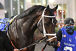 February 13, 2021: Beep Beep in the Risen Star Stakes at Fair Grounds Race Course in New Orleans, Louisiana. Parker Waters/Eclipse Sportswire/CSM
