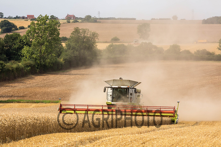 Harvesting Winter Wheat in Lincolnshire<br /> Picture Tim Scrivener 07850 303986