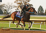 Calibrate, trained by trainer Steven M. Asmussen, exercises in preparation for the Breeders' Cup Juvenile at Keeneland Racetrack in Lexington, Kentucky on November 1, 2020. /CSM