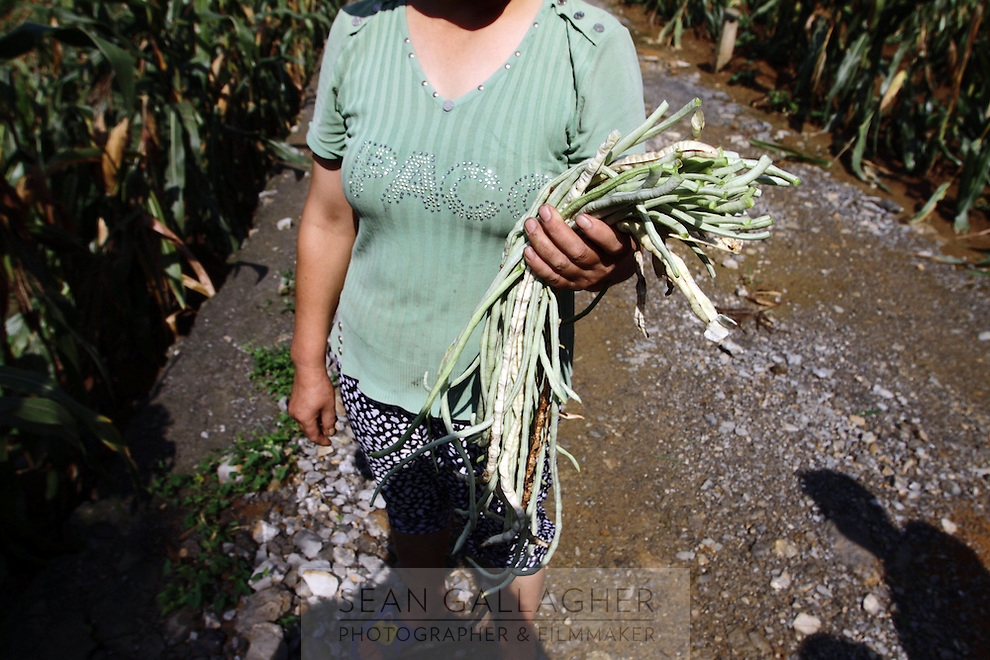 A farmer stands near her fields adjacent to the 'Bamboo Sea' found in southern Sichuan Province.