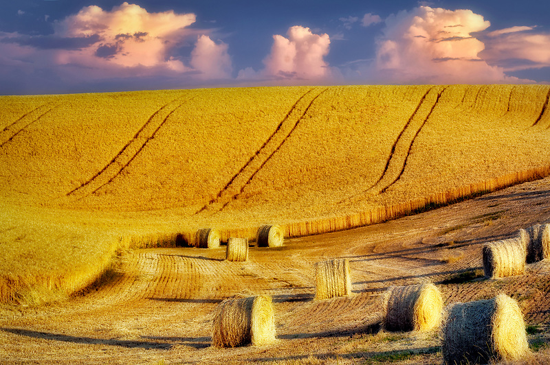 Bales of wheat straw. The Palouse. Washington
