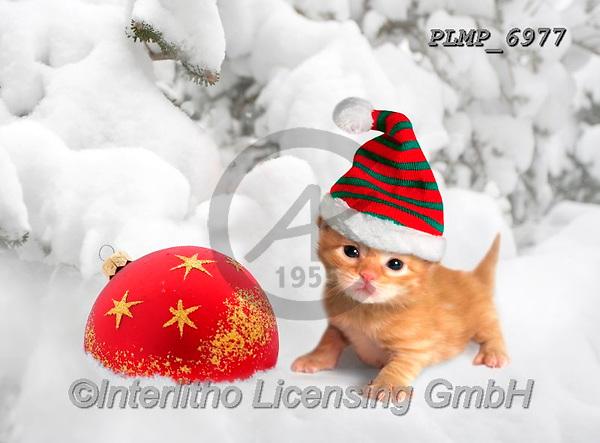 Marek, CHRISTMAS ANIMALS, WEIHNACHTEN TIERE, NAVIDAD ANIMALES, photos+++++,PLMP6977,#xa# ,kittens,cats