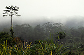 Roraima State, Amazon, Brazil. Rainforest vegetation in the mist at dawn; Paapiu.