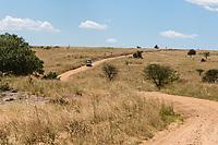 Tanzania. Serengeti Road, Northeastern Sector.