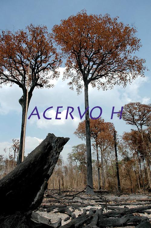 Queimada em Campos Novos, Iracema, Roraima - 03.03.2007
