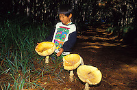 A mushroom in Kokee State Park (Amanita muscaria).