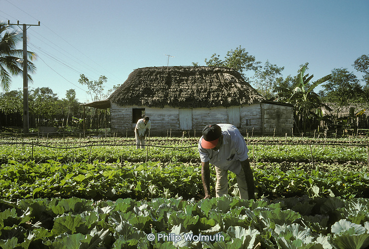 Two partners work on their newly established private market garden, growing vegetables for local sale near Playa Giron (The Bay of Pigs).