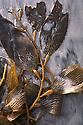 Kelp Leaves