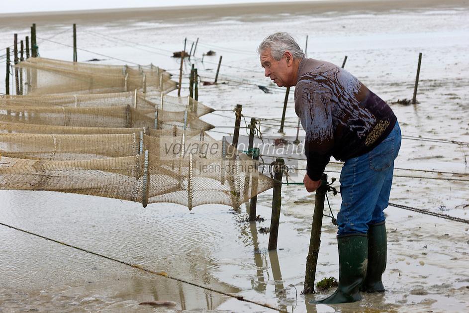 Europe/France/Basse-Normandie/50/Manche/Baie du Mont-Saint-Michel/Genêts: Les filets de Georges Roger Pêcheur de crevettes dans la baie -  Auto N°: A12-3013<br /> // Europe/France/Normandie/Basse-Normandie/ Bay of Mont Saint Michel, listed as World Heritage by UNESCO/ Genets:  Georges Roger Fisher nets of shrimp in the bay