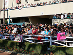 OOctober 2, 2010.Fans line the paddock and balcony's to see Zneyatta riden by Mike Smith in the paddock before winning The Lady's Secret Stakes at Hollywood Park, Inglewood, CA._Cynthia Lum/Eclipse Sportswire.com