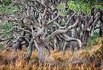 Oak (Quercus sp.) motte, Aransas National Wildlife Refuge, Texas, USA<br /> <br /> Canon EOS 5DS R, EF200-400mm f/4L IS USM lens, f/16 for .5 second, ISO 100