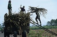 jbo70194 asia Philippines Negros agriculture biomass energy landless labourer people work on sugarcane sugar cane plantation hazienda.Asien Philippinen Negros Landwirtschaft landlose Landarbeiter mit Machete bei Zuckerrohrernte Zucker Zuckerrohr Biomasse Bagasse Energie Silhouette .copyright Joerg Boethling/agenda ph. ++49 40 39190714