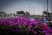 Brilliantly colored flowers dominate the foreground at the San Leandro Marina with boats and a pale blue sky in the background.