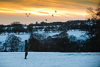 Shooting in snow, Lancashire. Ducks.
